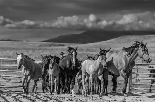 """""""Round Up"""" from the DSN Fundraiser collection by Chris Couture Photography"""