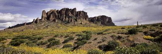 Superstitions North View With Flowers from the Desert Panoramas collection by Lou Oates