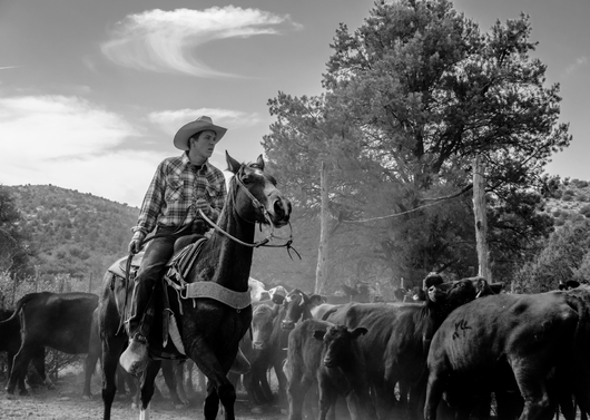 """""""Move 'Em Out"""" from the Western collection by Chris Couture Photography"""