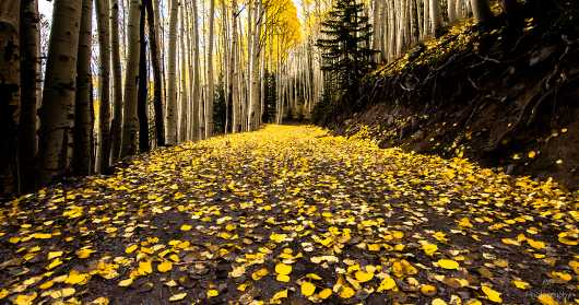 Inner Basin Trail. Lockett Meadow, Flagstaff, Arizona from the Gallery Photos  collection by Andy Rivera